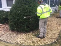 Shrub Trimming_4