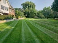 lawn5691233